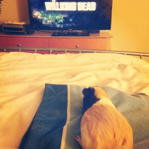 The Walking Piggy