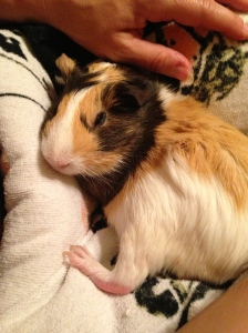 Snuggly piggy!